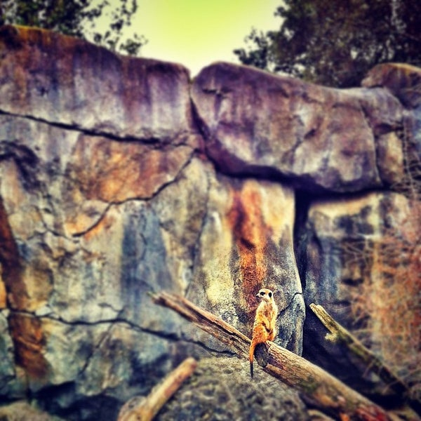 8/10/2012 tarihinde Evgeny P.ziyaretçi tarafından Auckland Zoo'de çekilen fotoğraf