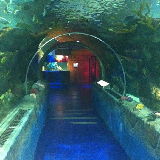 6/1/2012에 Adam N.님이 SEA LIFE Minnesota Aquarium에서 찍은 사진