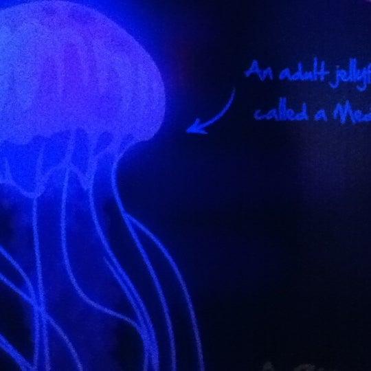 8/8/2012에 Amanda K.님이 SEA LIFE Minnesota Aquarium에서 찍은 사진