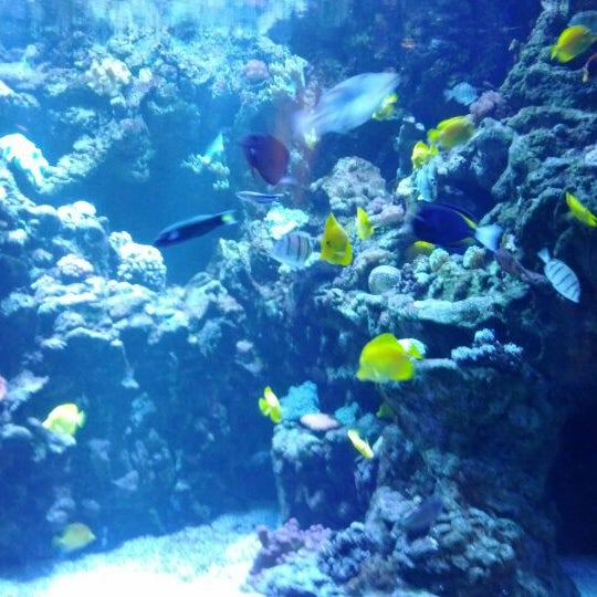 Das Foto wurde bei Aquarium of the Pacific von Daniel S. am 2/25/2012 aufgenommen