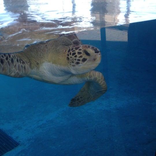 9/7/2012 tarihinde LocalStealsziyaretçi tarafından Texas State Aquarium'de çekilen fotoğraf