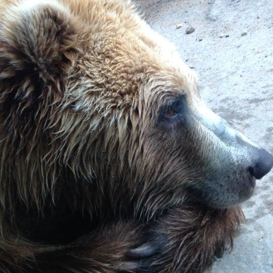 4/13/2012 tarihinde Kristen H.ziyaretçi tarafından Minnesota Zoo'de çekilen fotoğraf