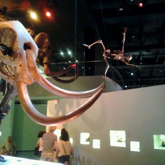 Foto scattata a Houston Museum of Natural Science da John B. il 9/8/2012