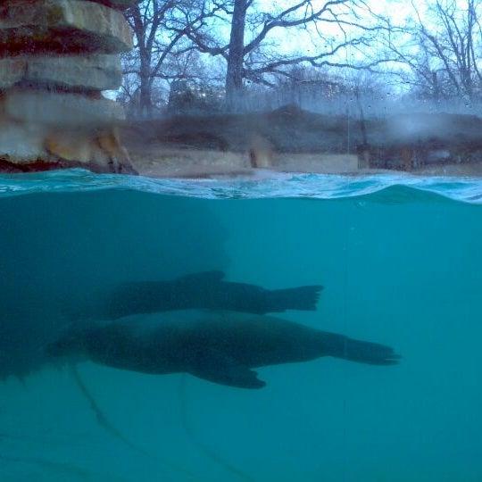 12/31/2011에 Nastya P.님이 Zoologischer Garten Berlin에서 찍은 사진