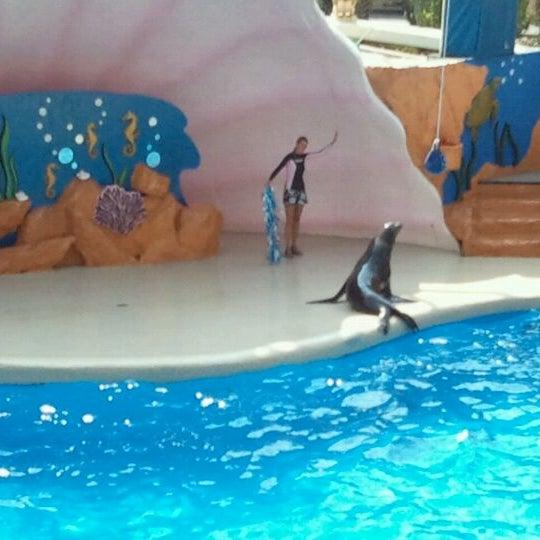 5/13/2011에 Erika M.님이 Miami Seaquarium에서 찍은 사진