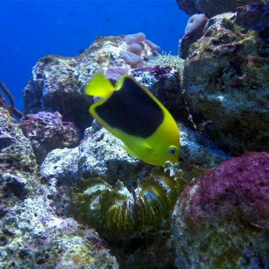 3/19/2011에 okzygen님이 Miami Seaquarium에서 찍은 사진