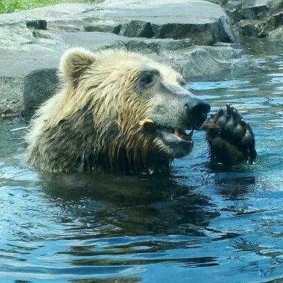 5/28/2012 tarihinde Miranda N.ziyaretçi tarafından Minnesota Zoo'de çekilen fotoğraf
