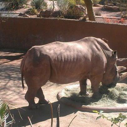 Снимок сделан в Phoenix Zoo пользователем M G. 3/15/2012