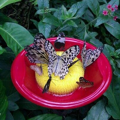 Foto scattata a Houston Museum of Natural Science da Lexi Soffer il 12/13/2011