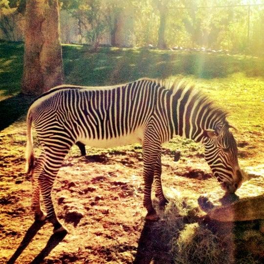 Foto tomada en Phoenix Zoo por Daniel S. el 11/26/2011