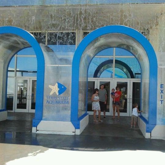 3/23/2012にlori d.がTexas State Aquariumで撮った写真