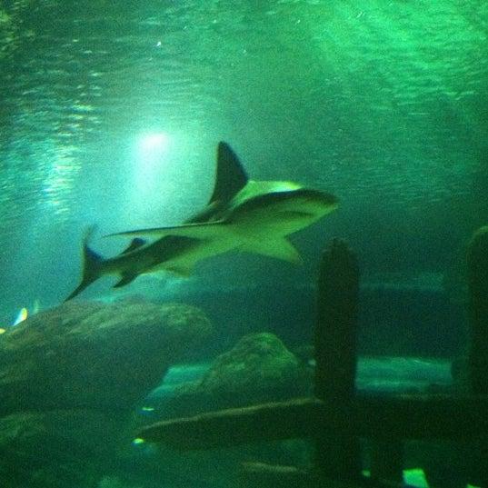 8/29/2012에 Katie G.님이 SEA LIFE Minnesota Aquarium에서 찍은 사진
