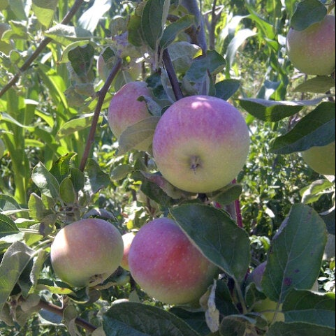 7/15/2012 tarihinde Recep D.ziyaretçi tarafından Silivri'de çekilen fotoğraf
