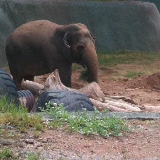 Foto tomada en Phoenix Zoo por Tabitha R. el 4/20/2011