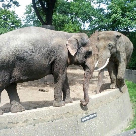 7/8/2012에 Antti V.님이 Zoologischer Garten Berlin에서 찍은 사진
