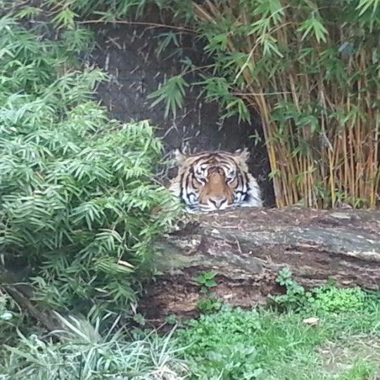 7/4/2012 tarihinde Lincoln V.ziyaretçi tarafından Auckland Zoo'de çekilen fotoğraf