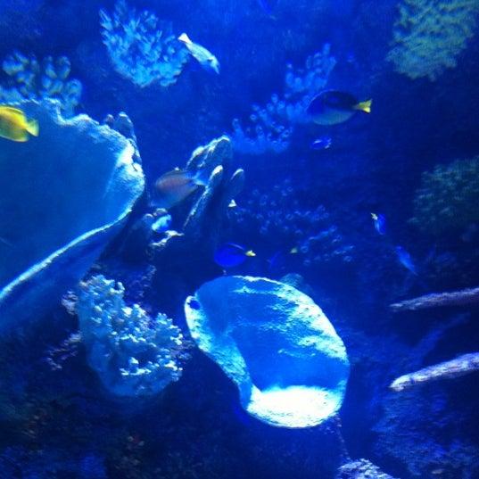 9/9/2012에 Ertuğrul Y.님이 Antalya Aquarium에서 찍은 사진
