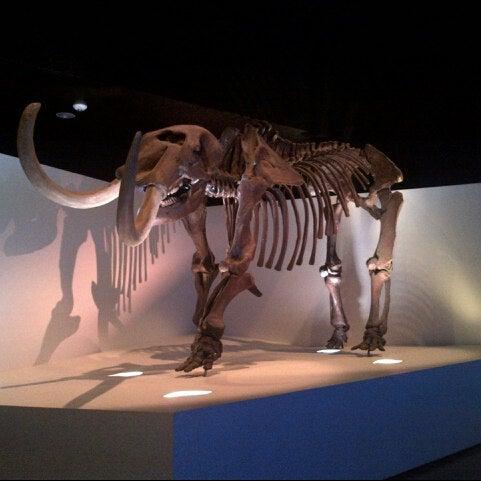 Foto scattata a Houston Museum of Natural Science da Jennifer W. il 8/21/2012