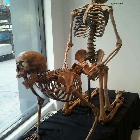 10/23/2011에 Miguel C.님이 Museum of Sex에서 찍은 사진