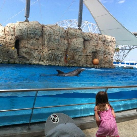 6/8/2012 tarihinde Rebekah Joy C.ziyaretçi tarafından Texas State Aquarium'de çekilen fotoğraf