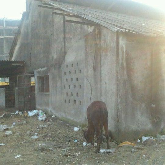 Photos at Goushala - Animal Shelter in Mulund