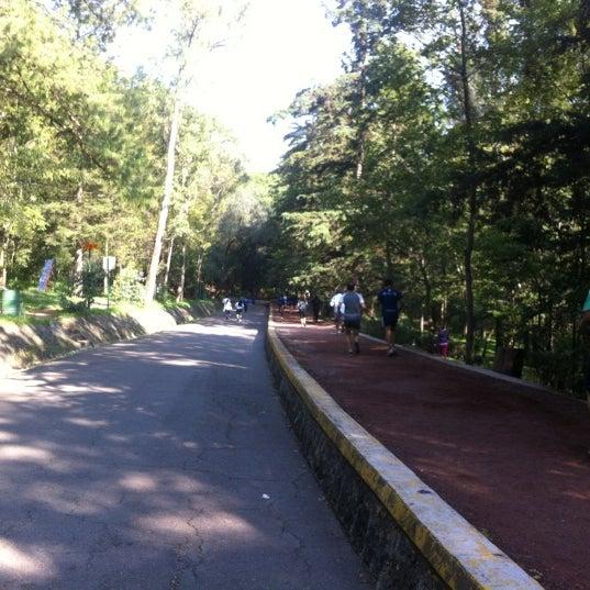 Foto Di Pista Del Bosque De Tlalpan 95 Tips Dari 3157 Pengunjung