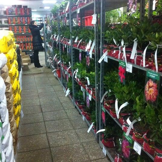Цветы в магазин мир увлечений