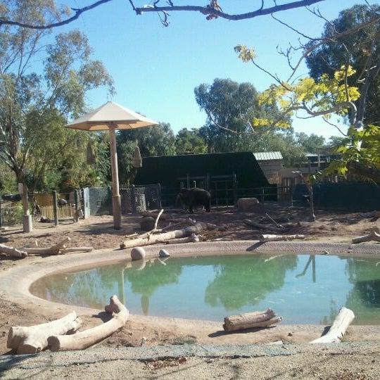 Снимок сделан в Phoenix Zoo пользователем J.C. C. 1/26/2012