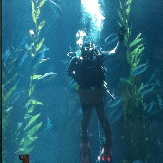 Das Foto wurde bei Aquarium of the Pacific von Phil E. am 7/24/2011 aufgenommen