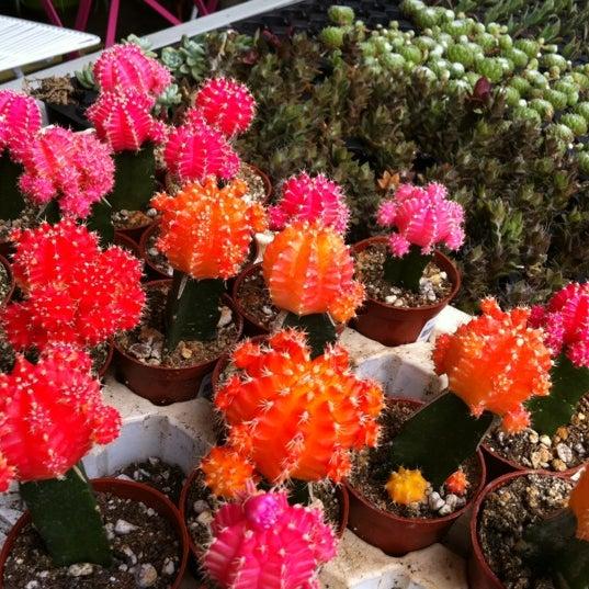 Foto tomada en Pigment por Licking the Plate el 4/21/2012