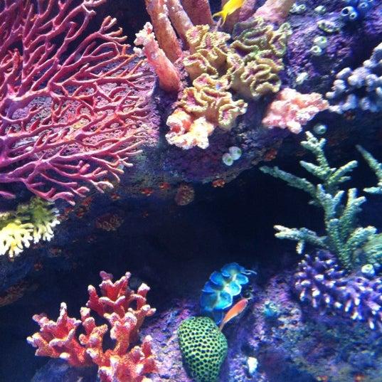 Das Foto wurde bei Antalya Aquarium von ®üy@ . am 8/26/2012 aufgenommen