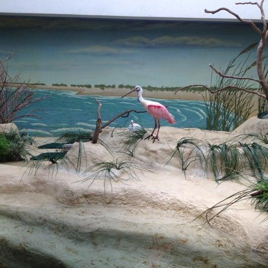 5/22/2012 tarihinde Lynne D.ziyaretçi tarafından Texas State Aquarium'de çekilen fotoğraf