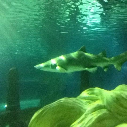 4/22/2012에 Bart H.님이 SEA LIFE Minnesota Aquarium에서 찍은 사진