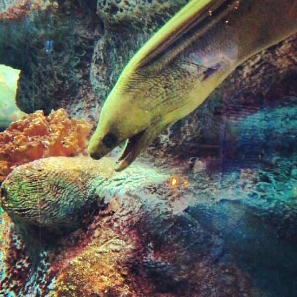 5/26/2012에 Recliner Jockey님이 SEA LIFE Minnesota Aquarium에서 찍은 사진