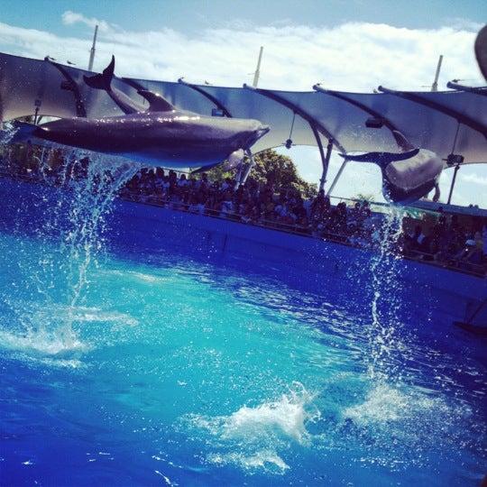 Foto scattata a Miami Seaquarium da moi K. il 4/7/2012