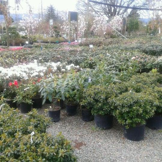 Photos At Loen Nursery Inc Sherwood Tualatin North 31