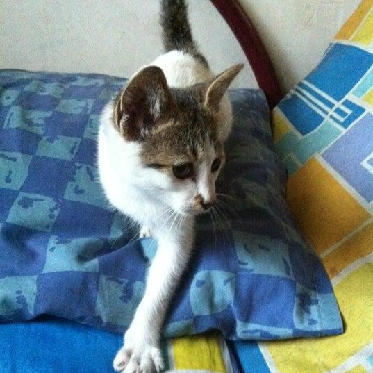 Photos At Anak Kucing Manja