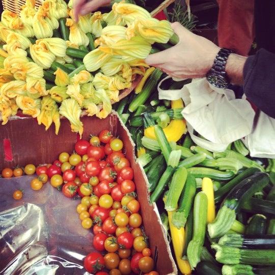 Zucchini blossoms 7/1/12