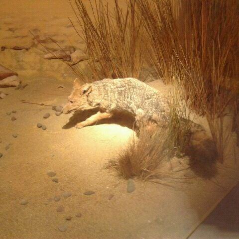 7/21/2012にCarolina I.がMuseo Nacional de Historia Naturalで撮った写真