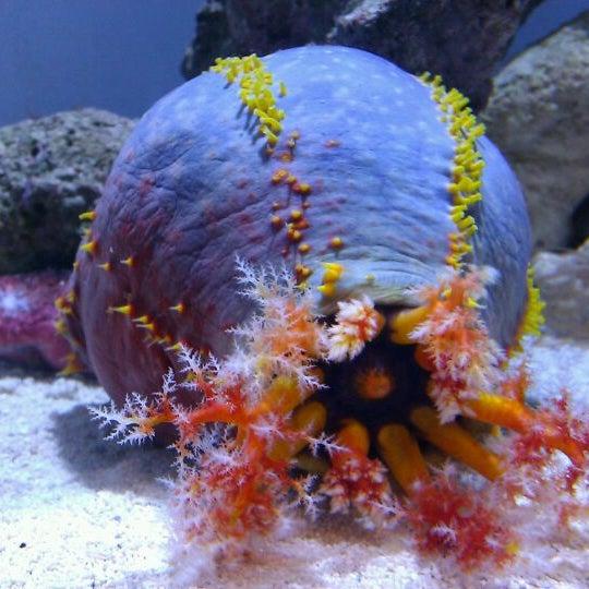 Das Foto wurde bei Aquarium of the Pacific von J F. am 3/5/2012 aufgenommen