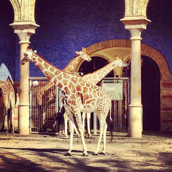 3/17/2012에 Matas님이 Zoologischer Garten Berlin에서 찍은 사진