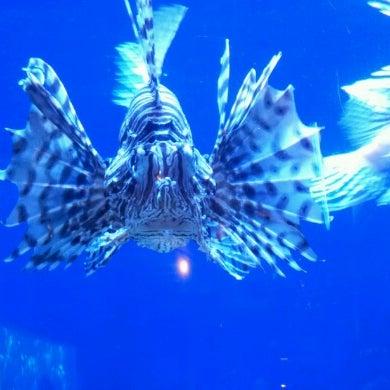 Das Foto wurde bei Aquarium of the Pacific von Chels V. am 8/7/2012 aufgenommen