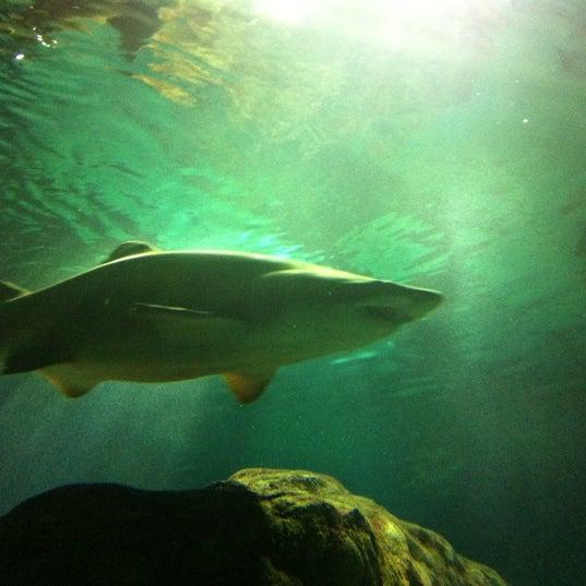"""8/12/2012에 Jason """"Gus"""" W.님이 SEA LIFE Minnesota Aquarium에서 찍은 사진"""