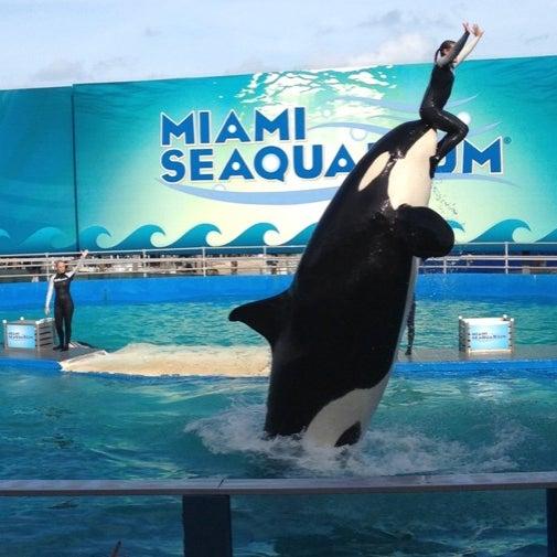 Foto scattata a Miami Seaquarium da Silver il 8/29/2012