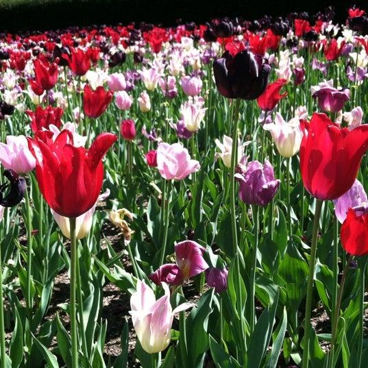 Foto scattata a Conservatory Garden da James C. il 4/29/2012