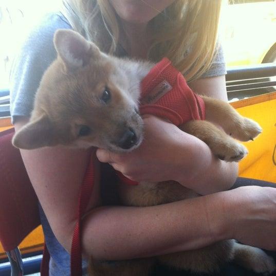 Foto tomada en Barking Dog por Sarah G. el 5/19/2012