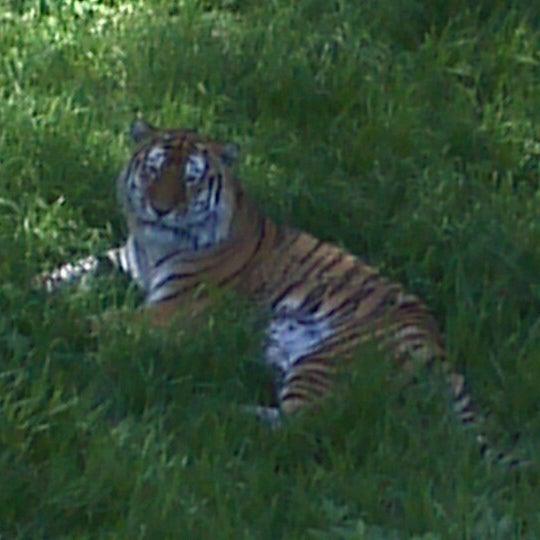 6/18/2012 tarihinde Olympia A.ziyaretçi tarafından Minnesota Zoo'de çekilen fotoğraf