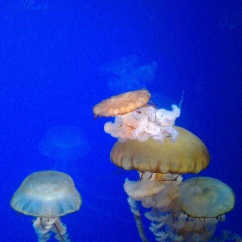 6/2/2012에 Angel J.님이 SEA LIFE Minnesota Aquarium에서 찍은 사진