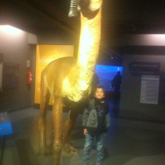 8/12/2012にMaria Paz I.がMuseo Nacional de Historia Naturalで撮った写真