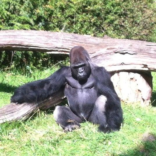 8/25/2012에 Christian H.님이 Zoologischer Garten Berlin에서 찍은 사진
